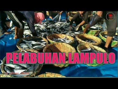 berburu-ikan-di-pelabuhan-ikan-lampulo-banda-aceh-(-hunting-fish-)