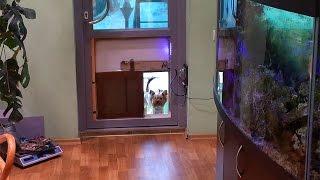 Автоматическая дверца для собаки