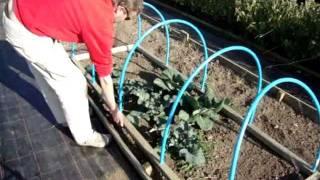 كيفية جعل المحمولة احرز مطوق المحاصيل النباتية حماية Cloche.يحتفظ بها الطيور والفراشات