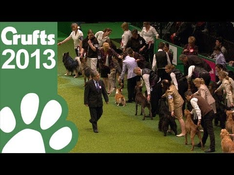 The Kennel Club Breeders Competition - Final Judging - Crufts 2013