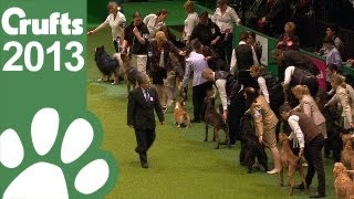 The Kennel Club Breeders Competition  Final Judging  Crufts 2013