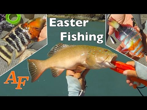 New Samaki Zing & Easter Bait Fishing Andy's Fish Video EP.313