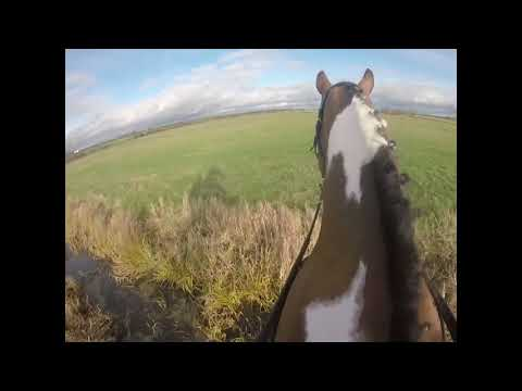 Taunton Vale Hunt - 01.12.2018 - Meare - GoPro Footage