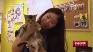 Singapore's first cat museum and shelter in one