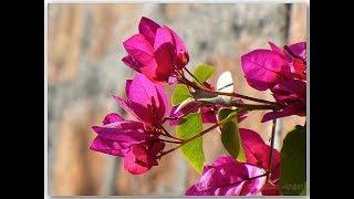 Las Flores del Campo Santo