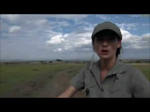 Safari Live : Jamie in the Masai Mara this afternoon June 16, 2017