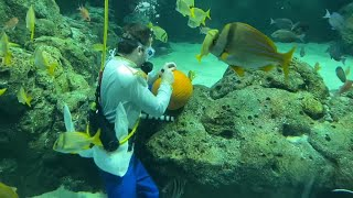 Watch Now: Underwater Pumpkin Carving at St. Louis Aquarium
