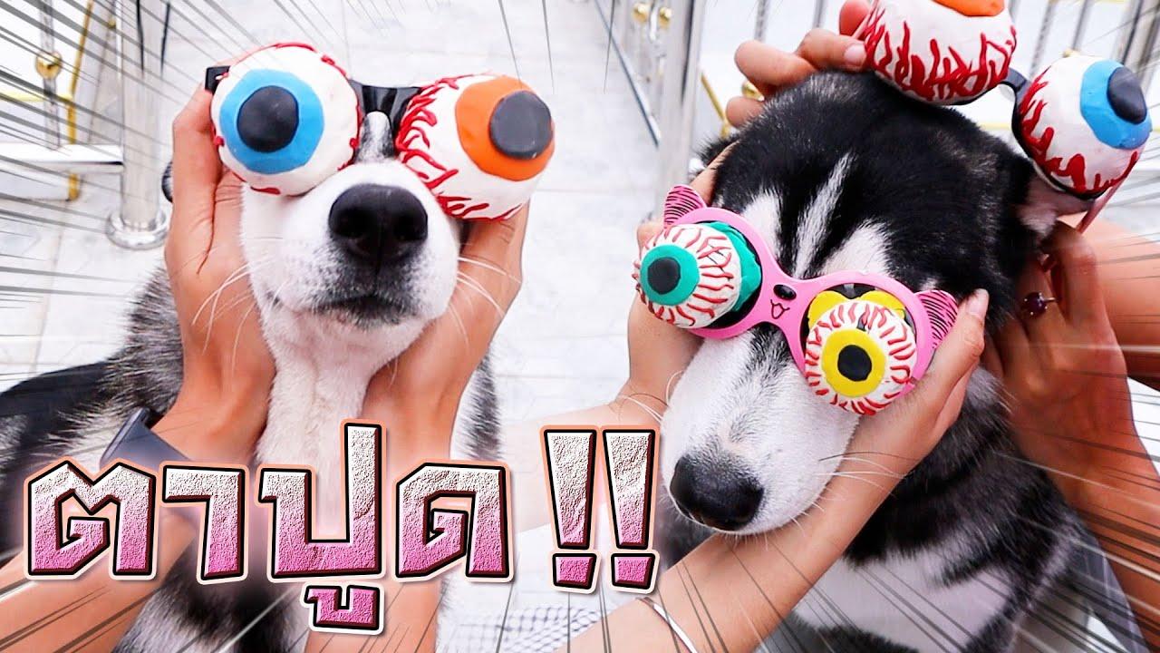 แว่น..เยลลี่ลูกตา !! หมาตาปูด..ทรงไหนดูดีกว่ากัน - DING DONG DAD