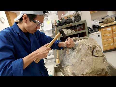 Large fossil discovery headed to UC Berkeley
