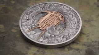 Evolution of Life 2016 – Trilobite