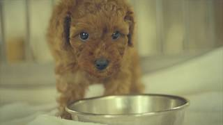 アニマルファーム 静岡県浜松市の子犬販売ブリーダー【WEBCM 】
