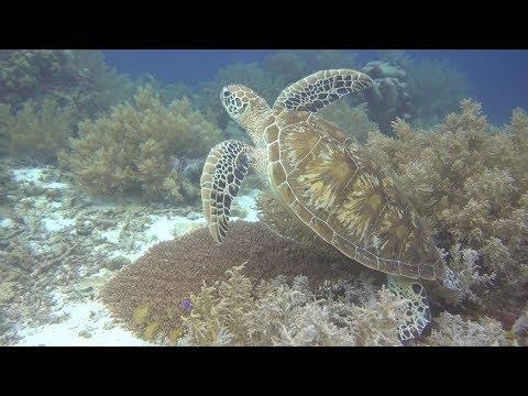Turtle City at Balicasag Island, Bohol, Philippines