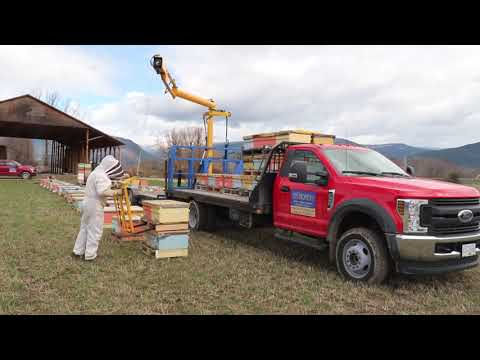 Moving Bees With An Ezy-Loader To Creston