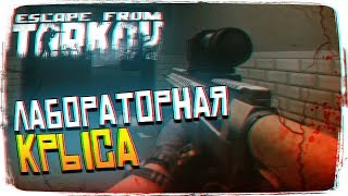 🔴ЕмБезХлеба!Escape From Tarkov ...