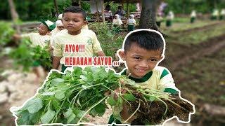 Menanam Sayur, TK Aisyiyah Bustanul Afthal 5 Bungah Gresik