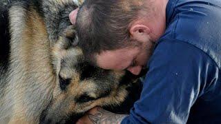 Немецкая овчарка Бадди спасла своего любимого хозяина.