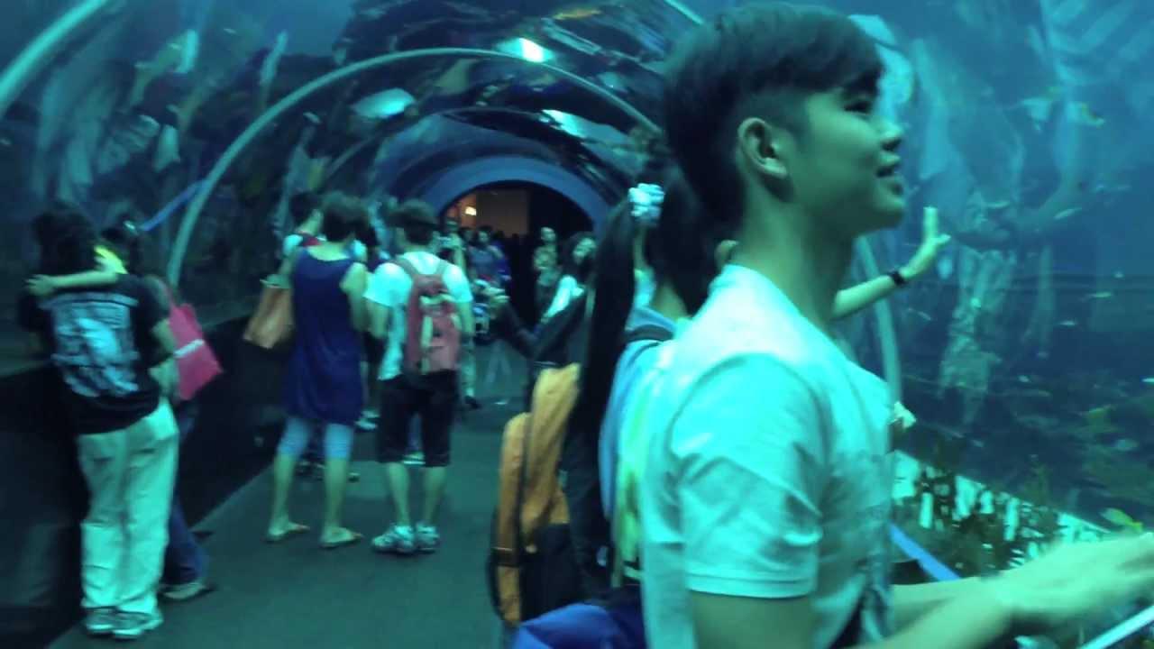 Fish aquarium in sentosa - The World S Largest Aquarium 2013 S E A Aquarium Resorts World Sentosa Singapore Youtube