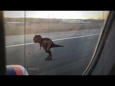 Real Dinosaur sighting caught on camera landing in Stockholm