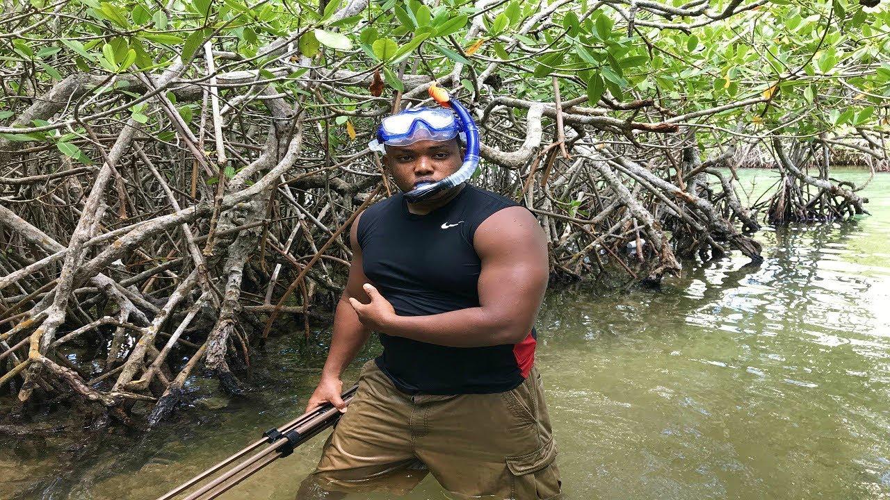 En estos manglares viven mas de 18000 peces youtube for Criadero de peces goldfish