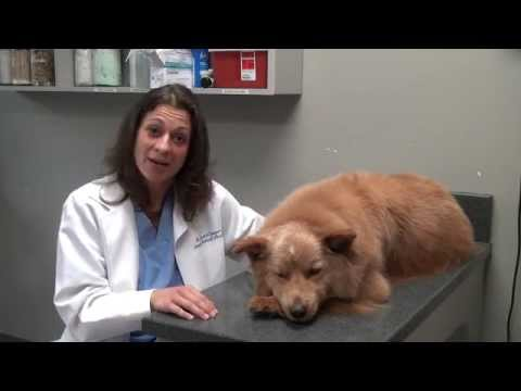 Spaying And Neutering With Dr. Cooper - Animal Medical Hospital, Charlotte