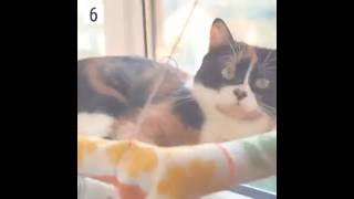 simple life hacks for cat owners