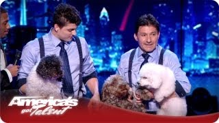 Rescue Dogs Do Backflips - The Olate Dogs America's Got Talent Season 7 Finals