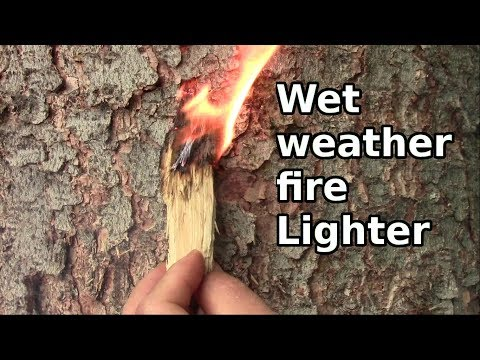 Find Dry Punk Wood Fire Tinder When Everything Is Wet