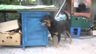 Собака танцует ламбаду 2