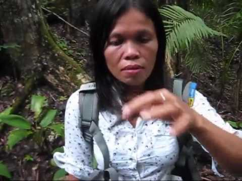 Seeing Bohol In A Rented Car Oceans To The Forest An Expat Philippine Lifestyles Video
