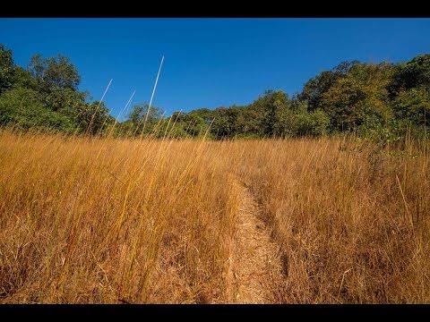 Kuveshi to Anmod - Day 6 - Goa Trek
