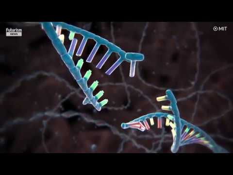 Watch CRISPR edit DNA in real time
