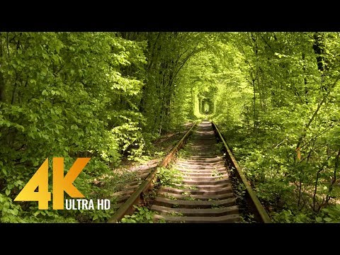 Walking Through the Tunnel of Love in Klevan, Ukraine - [4K] Virtual Walk with Birds Singing