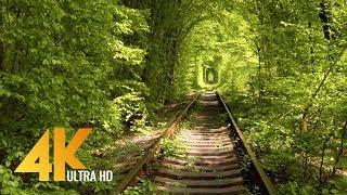 Tunnel of Love in Klevan, Ukraine 4K Ultra HD