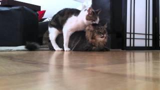 Cat Bang 2010