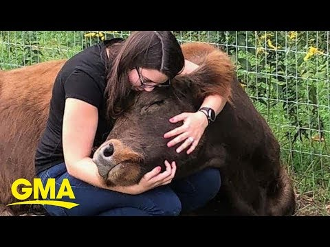 Cyndi & Chris - You Can Cow Cuddle for $75 An Hour!