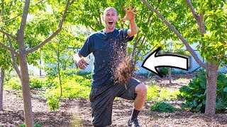 the hidden truth behind using wood chips in the garden
