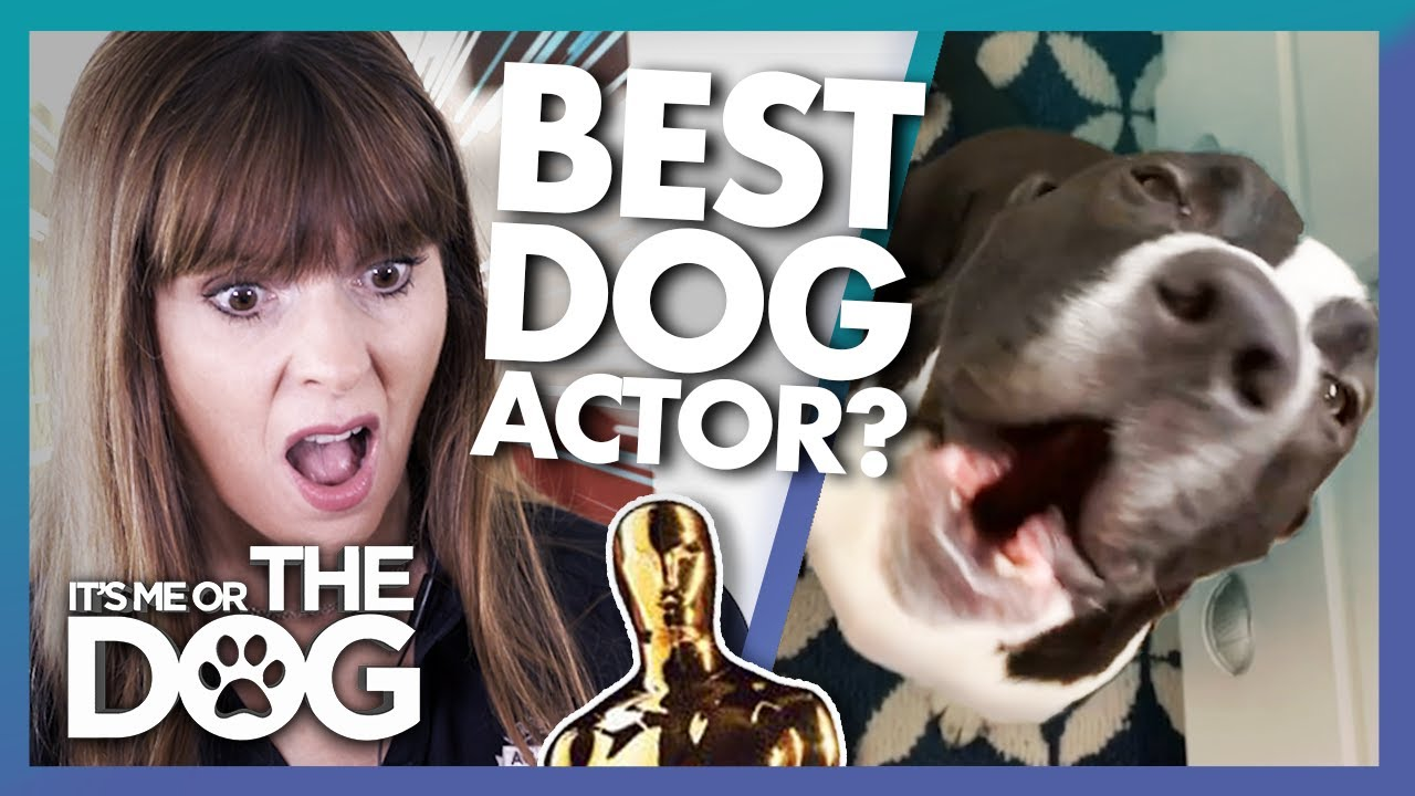 Is This Crying Dog Actually Upset or Just Having Fun? | It's Me or The Dog
