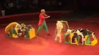Собачья Академия Николая Ермакова, Собачья Школа.(Цирковой номер с собаками из проекта