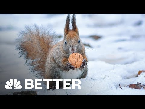 Winter Survival Guide For Your Home, Body, Car, And Bike   Better   NBC News
