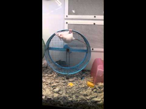 Poor Mouse Was Never Taught To Use Wheel