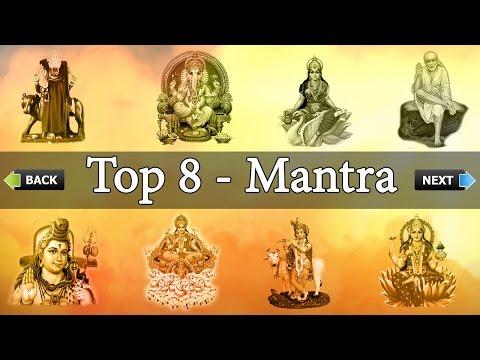 Top 8 -
