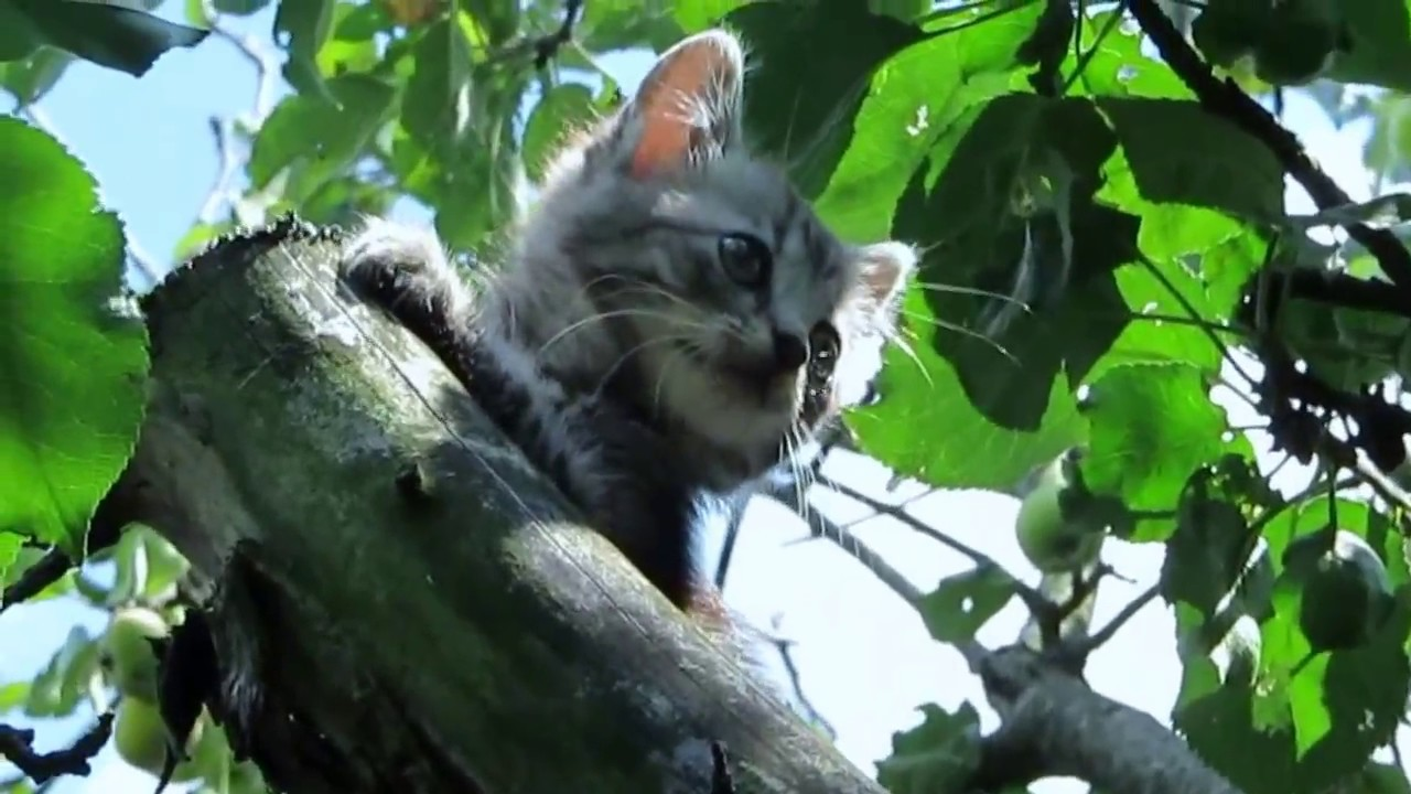 cat spiderman cute kitten playing on apple tree felis silvestris catus funny cats youtube. Black Bedroom Furniture Sets. Home Design Ideas