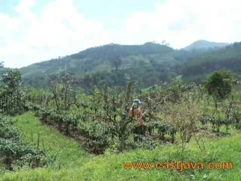 Krisna Agrotourism, Apple Plantation - Pasuruan