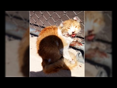 'Freeway' the cat saved by a good samaritan; Good guy with a gun stops carjacker - Compilation