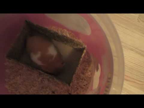 We clean the cage of hamster  very cute