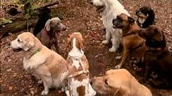 Hundeschule Lucky Dog Berlin