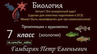 10. Тип Членистоногие, класс Насекомые (экспресс Зоология) подготовка к ОГЭ и ЕГЭ Биология