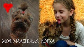 МОЙ ДРУГ СОБАКА ЖУЛЯ / Порода собачки йоркширский терьер / У меня есть маленькая собачка йорка