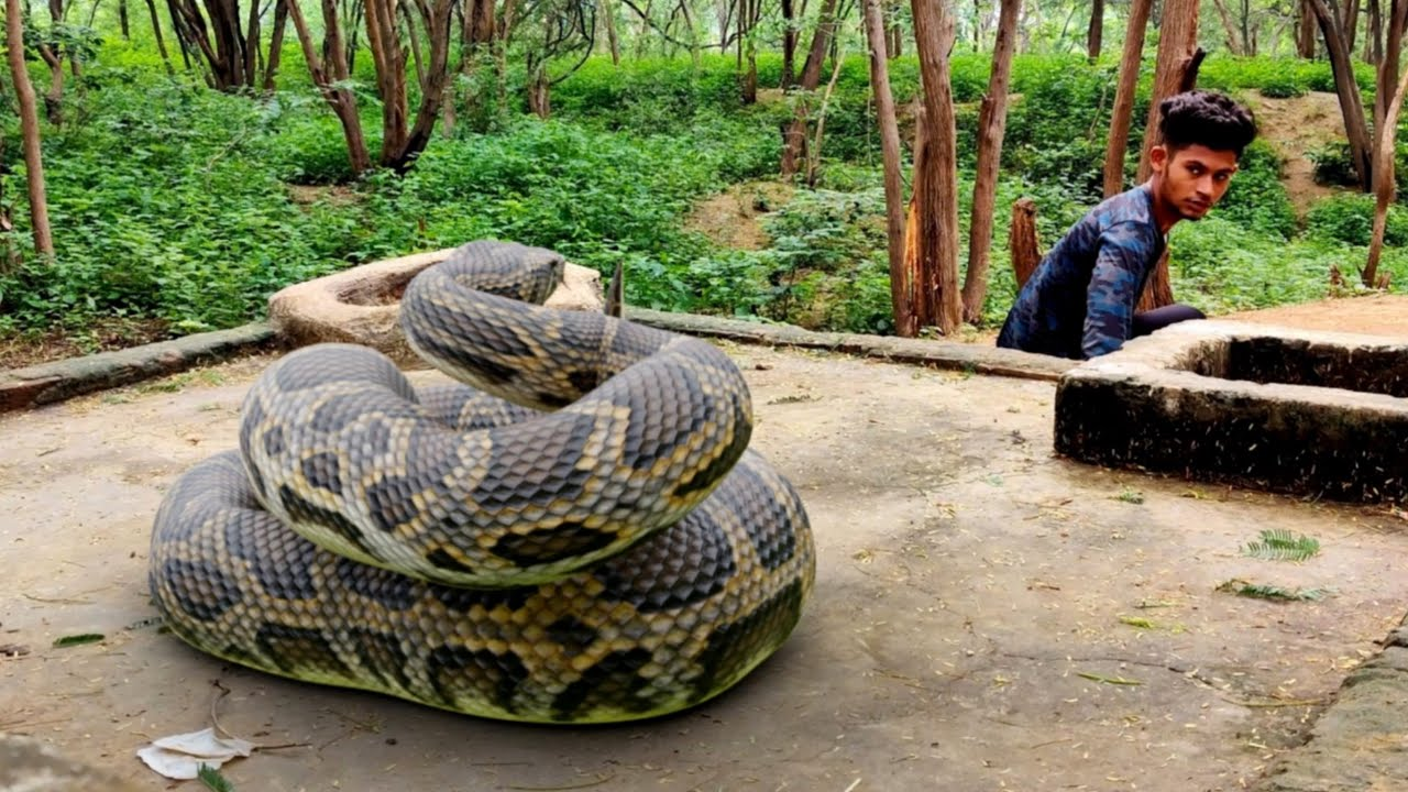 Anaconda Snake 3 in Real Life