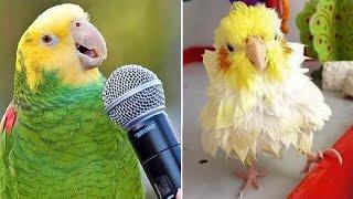 Baby Animals  Funny Parrots and Cute Birds Compilation (2021) Loros Adorables Recopilación #44